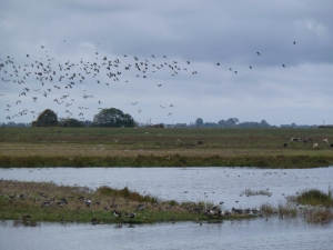 WWT Welney washes in autumn