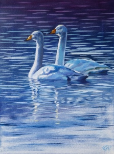 A Pair of Whoopers, oil on canvas, 31cm x 41cm.
