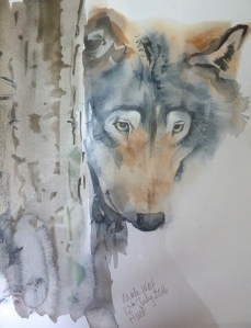 Wolf Sketch, watercolour and mixed media, mounted in a 32 x 42cm frame.