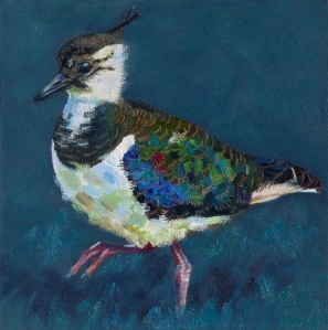 Young Lapwing, 20cm x 20cm oil on canvas. This youngster was strutting about confidently.
