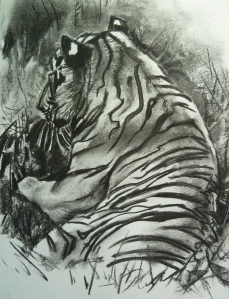 Tiger Sketch, charcoal, in a simple 32 x 42cm frame.